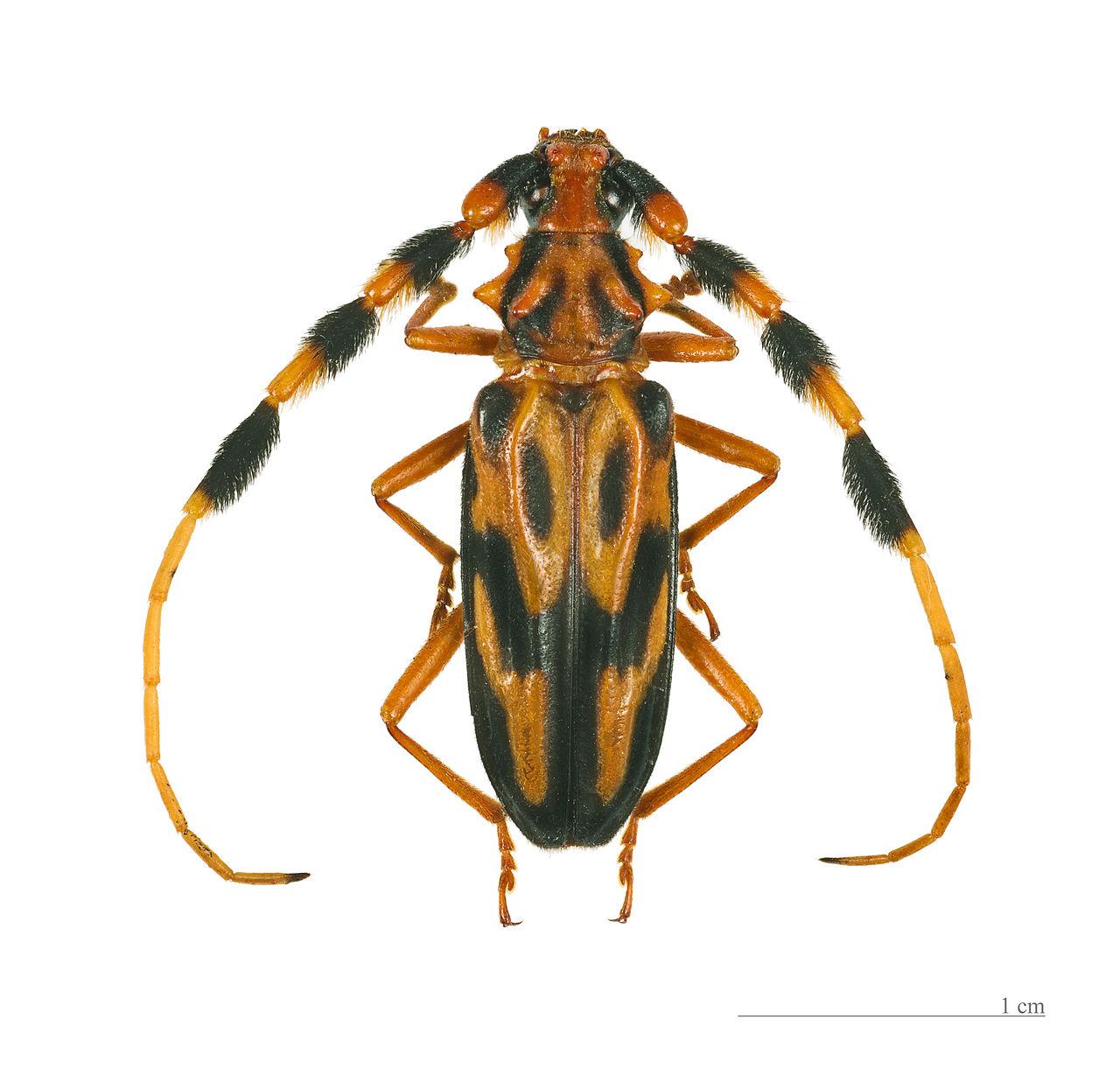 Coleoptera2015